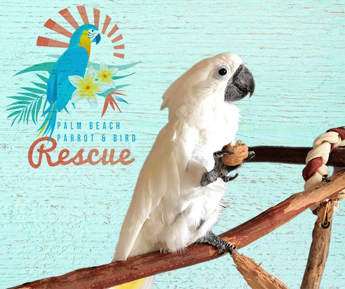 Palm Beach Parrot & Bird Rescue logo